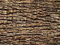 Palm_Tree_Texture_Tileable.jpg