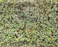 WallLeaf01.JPG