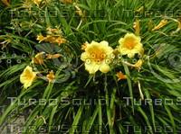 Yellow flower close.JPG