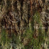 Treebark With Moss