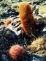 Mojave Photos 1