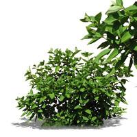 bush9