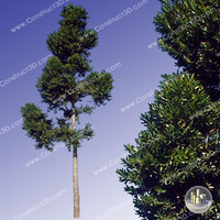 c3d_outback_tree_001.png