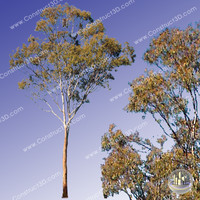 c3d_outback_tree_002.png