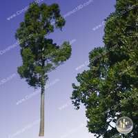 c3d_outback_tree_004.png