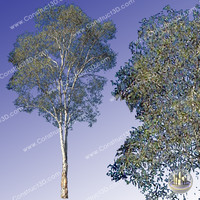 c3d_outback_tree_009.png