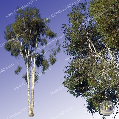 c3d_outback_tree_013_img.png