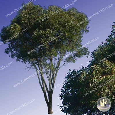 c3d_outback_tree_014_img.png