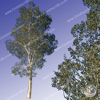 c3d_outback_tree_019.png