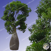 c3d_outback_tree_021.png