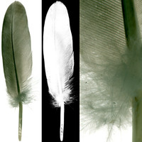 feather2.zip