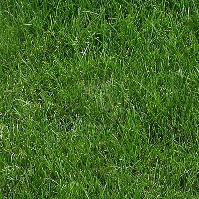 grass_002_2048x1365_tileable_TN.jpg