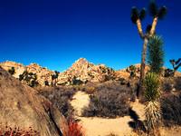 Mojave Photos 3