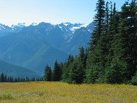 hurricane-ridge.jpg