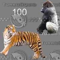 tex mammals 100