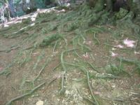 root_raices.JPG