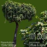 1504x1968 tree017.rar