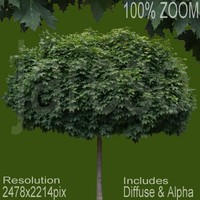 2478x2214 tree022.rar