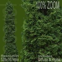 528x1674 tree024.rar
