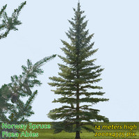 Norway Spruce Tree 14m ---------------------- High Resolution
