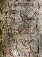 Bark (6).jpg
