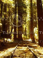 Roaring Camp Railroads - Sunny Railroad Track