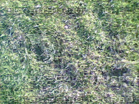 Grass2.bmp