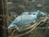 GreyFishInAquarium_1.jpg