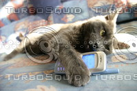 cat with mobile phone