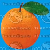 Orange Fruit.zip