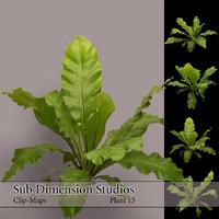 Plant_13