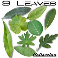 9LeavesCollection