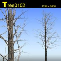 Tree0102.zip