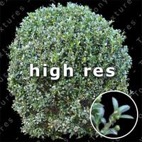 Bush 002 - HighRes