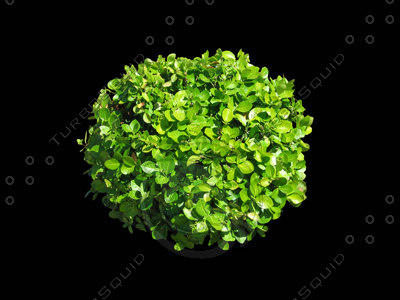 a3ds_shv1_shrub1_400.jpg
