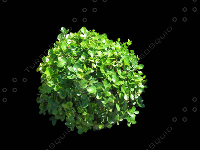 a3ds_shv1_shrub3_400.jpg