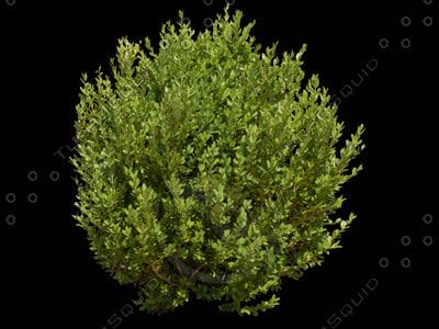 Texture tif shrub bush landscape