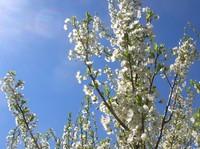 beeblossom2.jpg