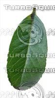 plant leaf 1