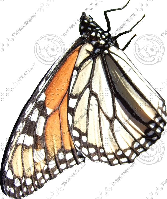 butterfly_1_small_c.jpg