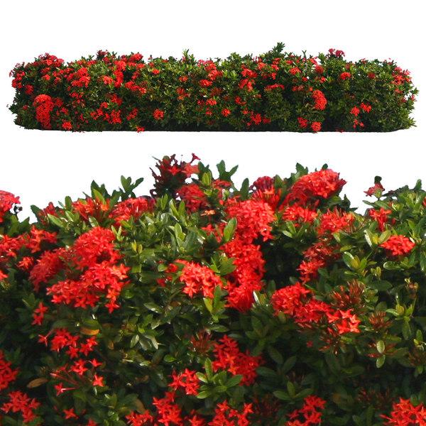 flowers11p.jpg