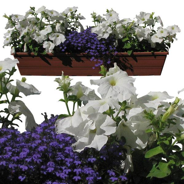 flowers12p.jpg