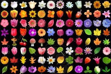 flowers_all.jpg