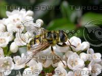 fly2692.jpg