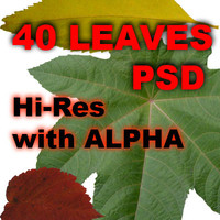 40 leaves set