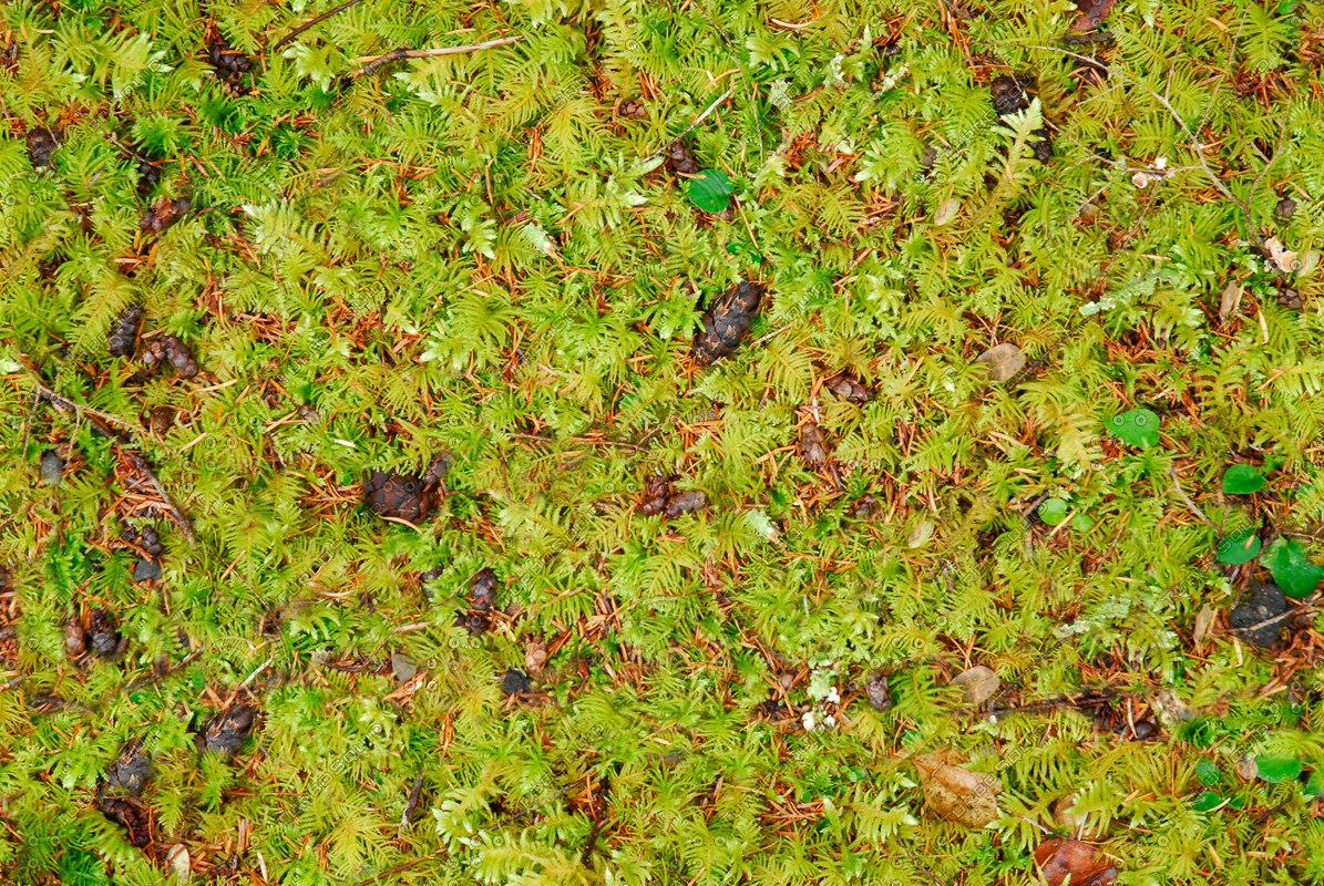 pineneedlesrainforest_HiRes_Tile.jpg