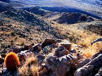 Mojave Photos 6