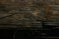 rotted_wood_texture.jpg