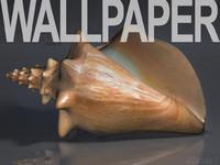 seashell Wallpaper.jpg