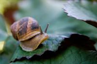 snail002.bmp